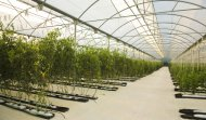 Pe Film For Greenhouses